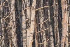 Hög av trä som tillsammans binds Royaltyfri Foto