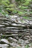 Hög av trädfilialer Arkivbild