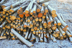 Hög av trädstammar vid vägrenen Arkivbild