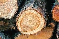 Hög av träjournaldetaljen arkivfoto