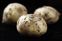 Hög av unga potatisar Royaltyfri Fotografi