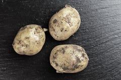 Hög av unga potatisar Arkivfoton