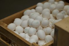 Hög av vita ägg Fotografering för Bildbyråer