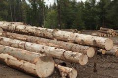 Hög av wood plankor Arkivfoto