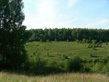 Hög bank som är bevuxen med grön vegetation Royaltyfria Foton
