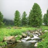 hög bergflod för flöde Arkivbilder