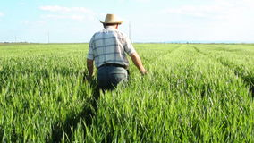 Hög bonde i en undersökande skörd för fält lager videofilmer
