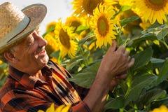 Hög bonde i en undersökande skörd för fält royaltyfri bild