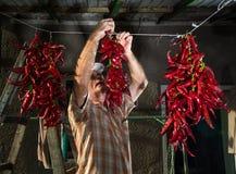 Hög bonde som hänger röd peppar arkivfoton