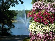 Hög buske som göras av olika färger Arkivbild