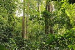 Hög djungel Henri Pittier National Park Venezuela för molnig rainforest men royaltyfria foton