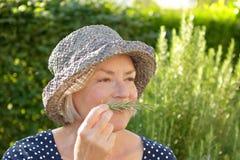 Hög doft för kvinnaträdgårdrosmarin royaltyfri bild