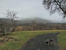hög ensam bildtangent för hund Royaltyfria Foton