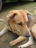 hög ensam bildtangent för hund Royaltyfria Bilder