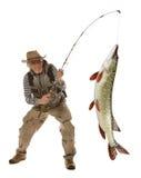 Hög fiskare med den stora fisken - pik & x28; Esox Lucius& x29; isolerat arkivfoto