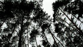 Hög gräsplan sörjer vaggar i vinden arkivfilmer