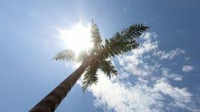 Hög härlig palmträd exponerad av solen bluen clouds skyen lager videofilmer