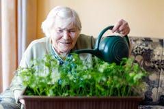 Hög kvinna av 90 år som hemma bevattnar persiljaväxter med vattencanen Royaltyfri Fotografi