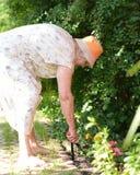 Hög kvinna som arbetar i trädgård. Royaltyfri Foto