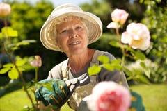 Hög kvinna som arbetar i trädgården Royaltyfri Bild