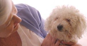 Hög kvinna som daltar en hund lager videofilmer