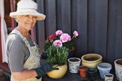 Hög kvinna som planterar blommor i en kruka fotografering för bildbyråer