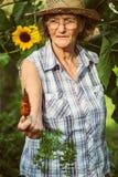 Hög kvinna som rymmer en skördad morot i hennes hand Arkivfoto