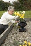 Hög kvinna som sätter blommor på en grav royaltyfri fotografi