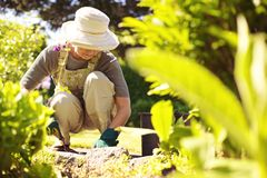 Hög kvinnlig trädgårdsmästare som arbetar i hennes trädgård Arkivbilder