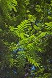 hög leafmodell för contrast royaltyfria bilder