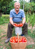 Hög man med en korg av tomater Royaltyfria Foton