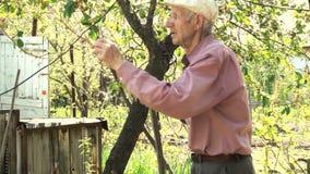 Hög man som ser de blommande träden på trädgården stock video