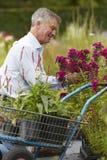 Hög man som väljer växter på den trädgårds- mitten Arkivbild