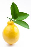 hög mogen citronfotokvalitet Arkivfoto