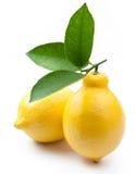 hög mogen citronfotokvalitet Arkivfoton