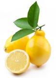 hög mogen citronfotokvalitet Royaltyfri Bild