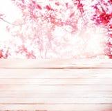 Hög nyckel- bakgrund av rosa färgvårblomningen Arkivbilder