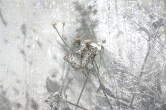 Hög nyckel- fjäril Arkivfoto