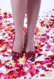 hög over övernaturlig petalsrose för tillbaka häl royaltyfri foto