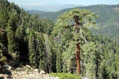 Hög platå med redwoodträdet i sequoianationalpark Arkivbild
