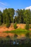 Hög sandig kulle för stora träd Royaltyfri Fotografi