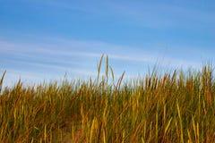 hög sky för gräs fotografering för bildbyråer