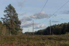 Hög-spänning kraftledning i en skog royaltyfria bilder
