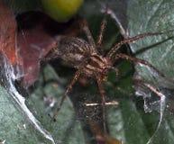 hög spindel för foto för banhoppningmakroförstoring Arkivfoto