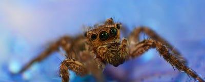 hög spindel för foto för banhoppningmakroförstoring Arkivbilder