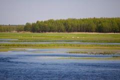 hög stork för gräs Royaltyfri Fotografi