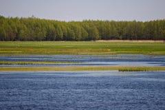 hög stork för gräs Fotografering för Bildbyråer