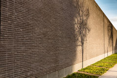 Hög tegelstenvägg med skuggor som faller på henne från träden Arkivfoto