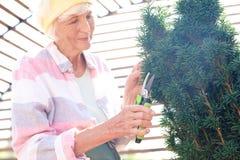 Hög trädgårdsmästare Cutting Bushes fotografering för bildbyråer