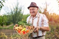 Hög trädgårdsmästare med skördade grönsaker Fotografering för Bildbyråer